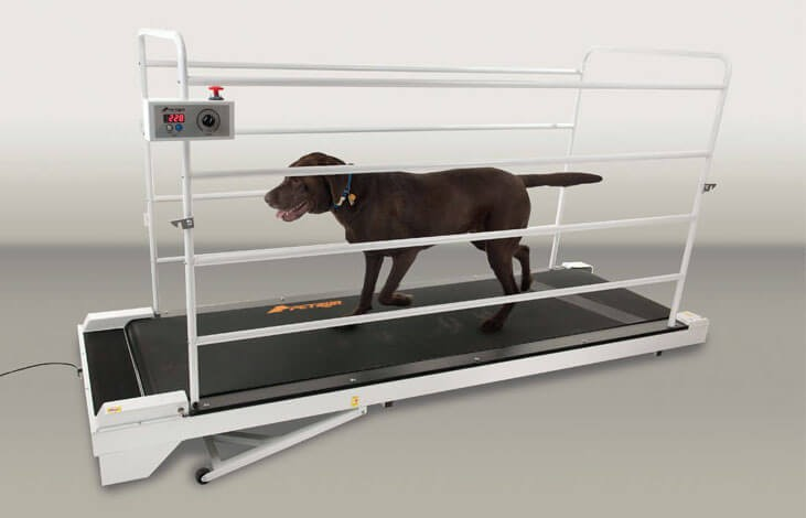 GoPet PR730 is the best treadmill for extra large dogs