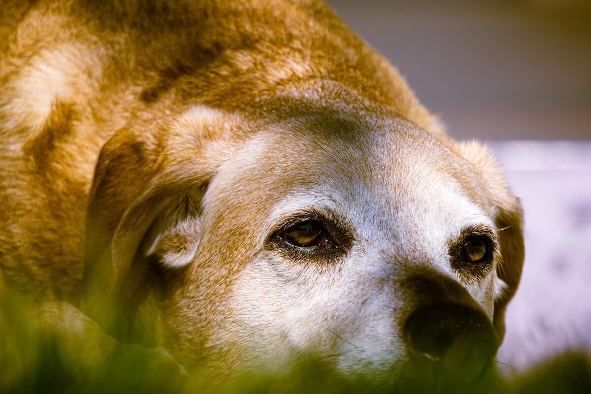 is adopting an older dog a good idea